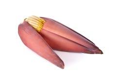 Свежее цветение банана на белой предпосылке Стоковая Фотография RF