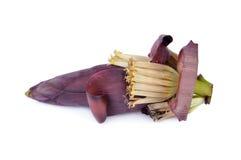 Свежее цветение банана на белой предпосылке Стоковое фото RF
