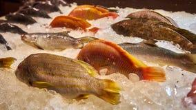 Свежее Fishs Ресторан на Koh Samui Стоковое фото RF