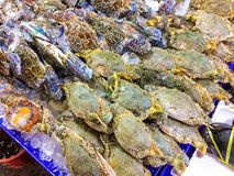Свежее pelagicus Portunus на подносе и контейнере с льдом на крабе в рынке и популярно туриста для отборных морепродуктов покупки стоковые фотографии rf