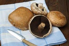 свежее portobello грибов Стоковые Фото