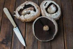 свежее portobello грибов Стоковые Изображения RF