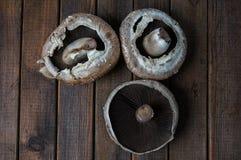 свежее portobello грибов Стоковые Изображения