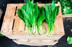 Свежее Ramsons на рынке Стоковое фото RF