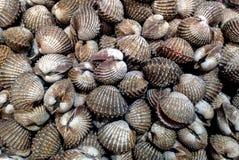Свежее Shelll в дисплее на рынке Стоковая Фотография