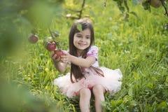 Свежесть, еда свежих фруктов Стоковое Фото