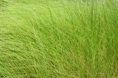 Свежесть зеленой травы, естественной предпосылки текстуры Стоковая Фотография RF