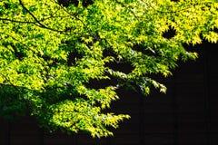 Свежесть зеленых листьев стоковое изображение rf