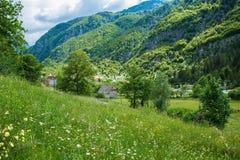 Свежесть лета зеленая в горе Стоковые Изображения