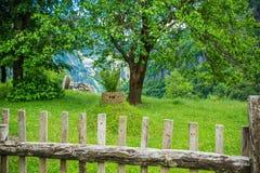 Свежесть лета зеленая в горе Стоковая Фотография RF