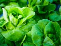 Свежесть овоща капусты стоковые изображения