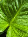Свежесть после идти дождь стоковые изображения rf