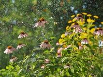 Свежесть сада утра Стоковая Фотография