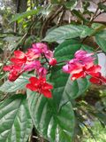 свежесть цветков Стоковое Изображение RF