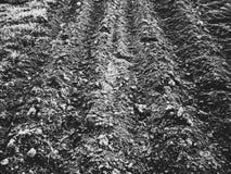 Свеже вспаханная земля Стоковые Изображения RF