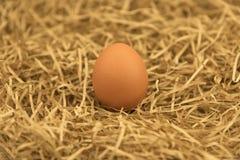 Свеже выбранное яичко с соломой Свежее яичко на траве соломы сена Стоковое Изображение RF