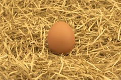 Свеже выбранное яичко с соломой Свежее яичко на траве соломы сена Стоковые Фотографии RF