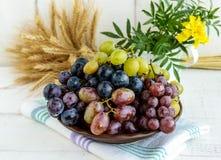 Свеже выбранные виноградины в нескольких разнообразий шара глины Стоковая Фотография