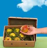Свеже выбранные груши Williams (Bartlett) в коробке Стоковое Изображение