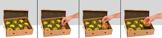 Свеже выбранные груши Williams (Bartlett) в коробке Стоковое фото RF