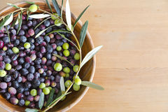 Свеже выбранные оливки Стоковая Фотография