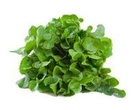 свеже выбранный салат Стоковое Изображение