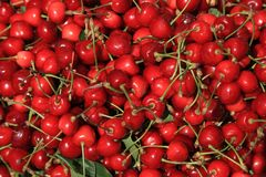 Свеже выбранный сладостных вишен, вкусная предпосылка Стоковое фото RF
