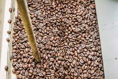Свеже зажаренные в духовке кофейные зерна от roaster кофе Стоковые Изображения