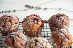 Свеже испеченные пирожные с крыжовником Стоковая Фотография RF
