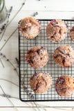 Свеже испеченные пирожные с крыжовником Стоковое Изображение RF