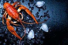 Свеже кипеть ракы на темной таблице с льдом Стоковые Изображения RF