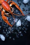 Свеже кипеть ракы на темной таблице с льдом Стоковое фото RF