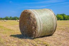 Свеже накошенное поле с круглыми связками сена с голубым небом в ба стоковые изображения rf