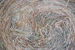 Свеже отрежьте конец-вверх сена лета стоковые фотографии rf