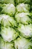 Свеже отрежьте салат упакованный для транспорта Стоковые Изображения