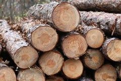 Свеже отрежьте сосну вносит дальше лес в журнал outdoors Стоковая Фотография