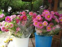 Свеже пинк полевых цветков выбора стоковые изображения rf