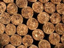 Свеже свернутые сигары Стоковое Изображение RF