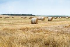 Свеже сено отрезка напиханное в крены лежит и сушит на поле Стоковые Фото