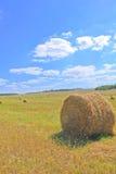 Свеже сжатое сено Стоковые Фото