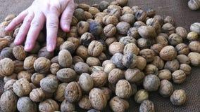 Свеже сжатые грецкие орехи удерживание свежих рук еды принципиальной схемы морковей пука плюшки предпосылки здоровое изолировало  видеоматериал