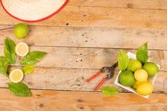 Свеже сжатые лимоны Стоковые Изображения RF
