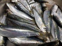 Свеже уловленные сардины и подготавливают для еды Стоковое фото RF