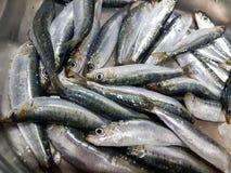 Свеже уловленные сардины и подготавливают для еды Стоковое Фото