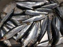 Свеже уловленные сардины и подготавливают для еды Стоковая Фотография RF