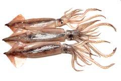 Свеже уловленный кальмар который shinny стоковое изображение