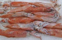 Свеже уловленный кальмар loligo на задавленном льде на дисплее для продажи на рыбном базаре стоковые изображения rf