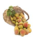 Свежие абрикосы Стоковые Изображения RF