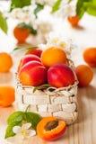 Свежие абрикосы стоковая фотография rf