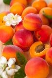 Свежие абрикосы стоковое изображение rf